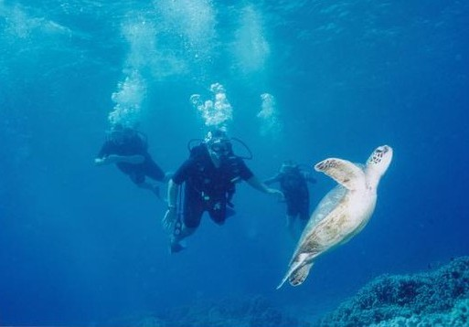 Interventionist Jeff Pope diving with a sea turtle.